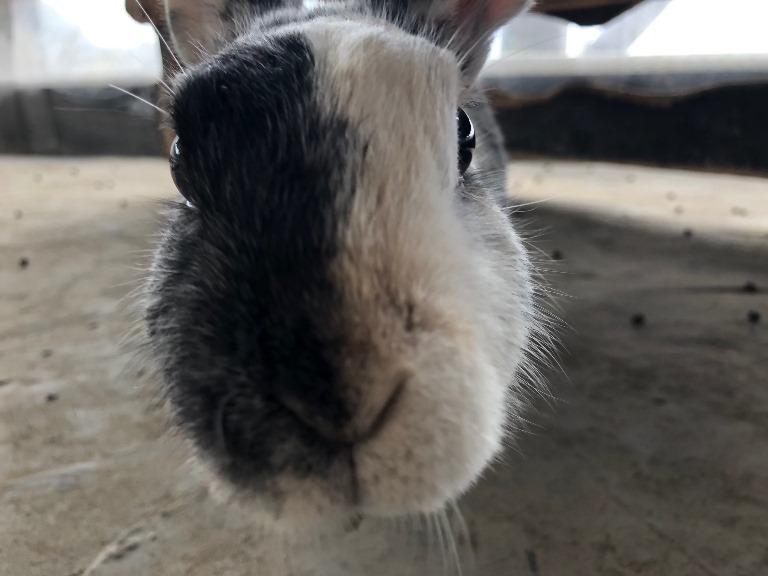 ~ ウサギさん ~