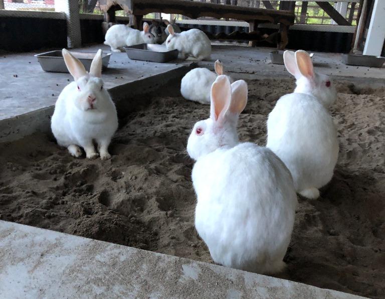 ~ 本日のウサギさんたち ~