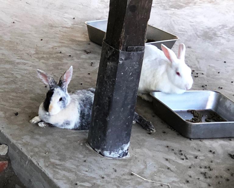 ~ 小屋の中のウサギさん ~